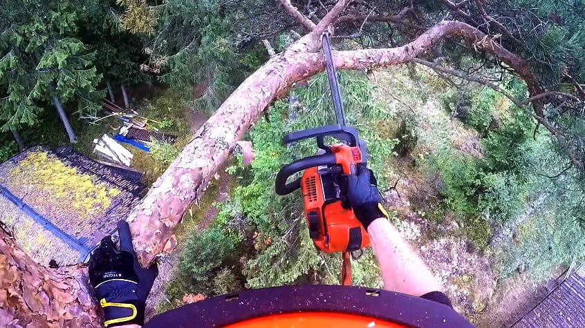 How To Cut Tree Branches That Are Too High To Reach - 7 Effective Ways by iSaw Guide