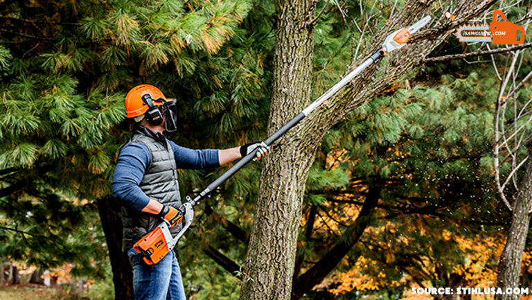 Best Tools For Cutting Tree Branches For Professional